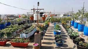 terrace garden planting flowers
