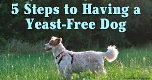 Eating These Foods Can Cause Dog Yeast Infection