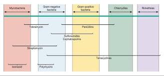 Gram Positive Antibiotics Chart Spectrum Of Antibiotic Activity Respiratory Therapy