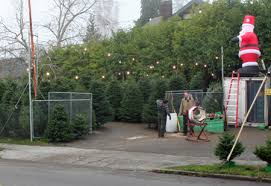 Photos Christmas Trees Arrive At Morning Pride Lions Tree Lot Local Christmas Tree Lots