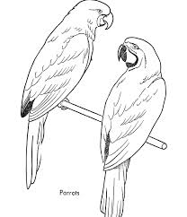 Small Picture Parrot coloring pages 3 Nice Coloring Pages for Kids