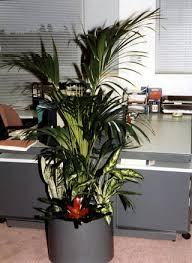 office plant displays. Maintenance Of Existing Plant Displays Or Contracts Office