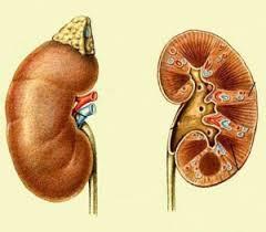 Туберкулез почек у детей причины симптомы лечение туберкулез почек