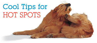 Dog Skin Care: Controlling Itchy Hot Spots - How to Prevent Acute ...
