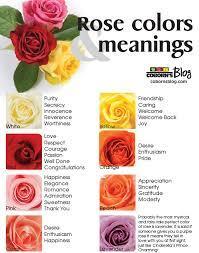 rose color meaning effy moom