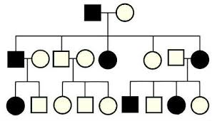 Biology Pedigree Chart Maker Pedigrees Sada Margarethaydon Com