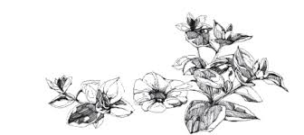 tumblr transparents black and white flowers. Contemporary Tumblr Transparent Flowers  Intended Tumblr Transparents Black And White Flowers K