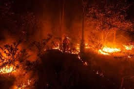 Image result for indian bush fire