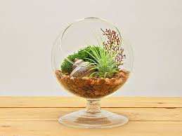Air Plant Terrarium Amazoncom Bliss Gardens Air Plant Terrarium 4 Round Glass