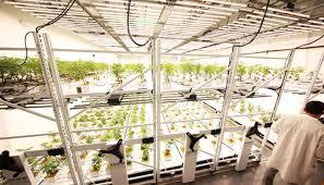 vertical grow systems for indoor farming