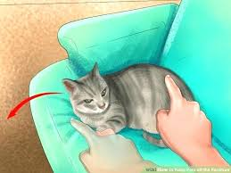 how to keep cats off furniture spray to keep pets off furniture how to keep cats