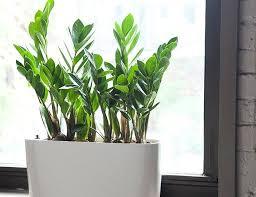 good indoor plant plant gear patrol best urban indoor best large indoor plants uk