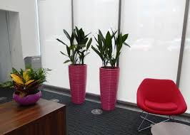 office plant displays. Tall Circular Spin Plant Displays For New Hq Offices In Edgbaston Birmingham Office