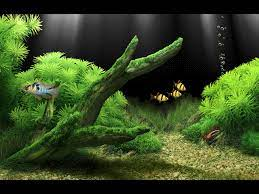 3d Aquarium Background For Desktop ...