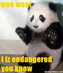 cute animals quotes. Interesting Cute Funny Animals  Scared Panda Animal Pictures StrangeNature Inside Cute Quotes D