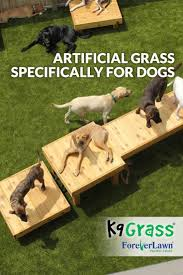 artificial grass for pets. K9Grass, The Artificial Grass Designed Specifically For Dogs, Is A Cleaner, Safer And Better Smelling Environment Pets. Pets