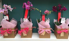 gift wrapped orchids 12 99 including gift wrap from our houseplant department