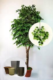 <b>Искусственные растения</b>: декоративные деревья, цветы от ...