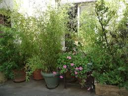 Entretien Des Bambous En Pot Pivoine Etc