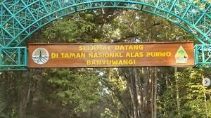 Image result for Info Wisata Taman Nasional Alas Purwo Banyuwangi yang Terkenal Angker