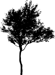 45 Tree Silhouettes Png Transparent Background Onlygfxcom