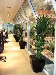 perfect office plants. Kentia Palm In A Quadik Planter.....the Perfect Office Plant Combination Plants E