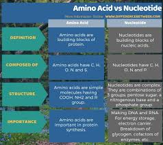 difference between amino acid and