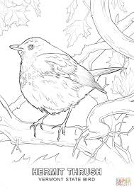 Small Picture Vermont State Bird coloring page Free Printable Coloring Pages
