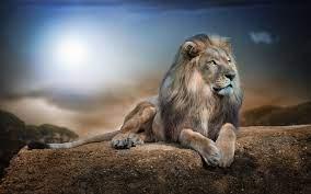 Lion Desktop Wallpapers - Top Free Lion ...