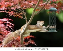 <b>Squirrel Bird</b> Images, Stock Photos & Vectors | Shutterstock