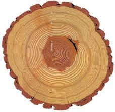 Image result for tree rings
