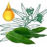 <b>Eucalyptus</b> globulus Leaf Oil (<b>эфирное масло эвкалипта</b>)