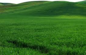 Vast expanse of green grass hd picture Free stock photos in Image