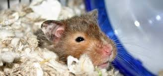 what hamster bedding not to use
