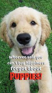 Dog Phone Wallpapers - Top Free Dog ...