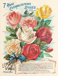 garden catalogs by mail 9 best seed catalogs jessie prior images on