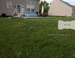 trugreen lawn care pictures