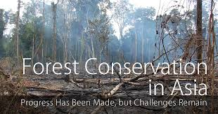 essay on conservation of forest   best custom written essays from      iges or jp