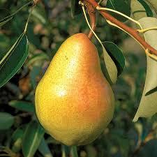 Apple Trees For Sale  Nature Hills NurseryHybrid Fruit Trees For Sale