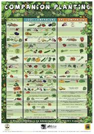 Arugula Companion Planting Chart Companion Planting Chart Growin Crazy Acres