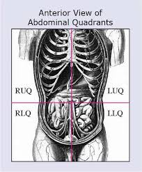 Abdominal quadrants quadrants divide our bodies into regions for diagnostic and descriptive purposes. Anatomical Terms Meaning Anatomy Regions Planes Areas Directions
