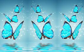 Butterfly Desktop Wallpapers ...