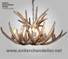 reion mule deer bowl shape antler chandelier crs 12