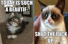 grumpy cat so beautiful. Plain Beautiful Today Is Such A Beautiful Shut The Fuck Up Funny Grumpy Cat Image Intended So C