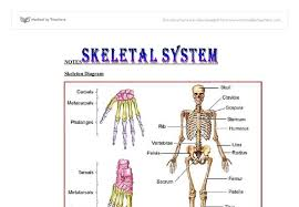 skeletal system essay skeletal system essay best sample essays