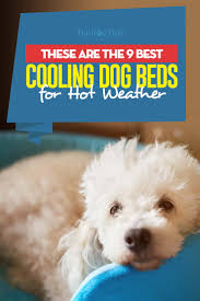 top 9 best cooling dog beds for hot weather