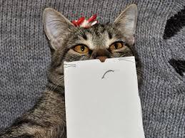 Çizme Gözlerle Kedi Montajı