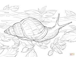Small Picture Snail coloring pages Free Coloring Pages