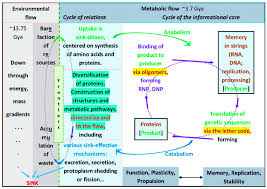 Functions Of Nucleic Acids Fundamentals Of Living Beings Cellular Functions Are