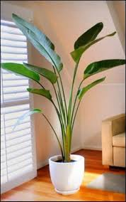 Best Indoor Palm Trees | ... indoor plants suitable for beginners or for  people